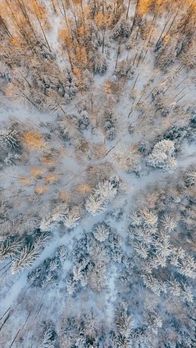冬季 雪地 树林 树林 航拍