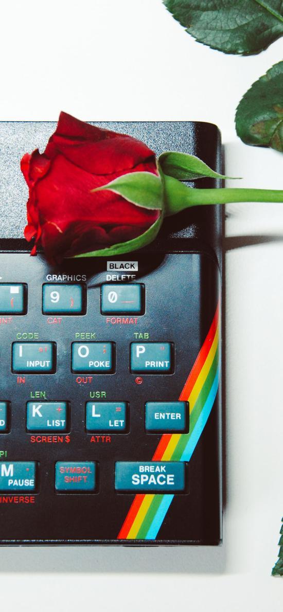 静物 玫瑰 键盘 枝叶