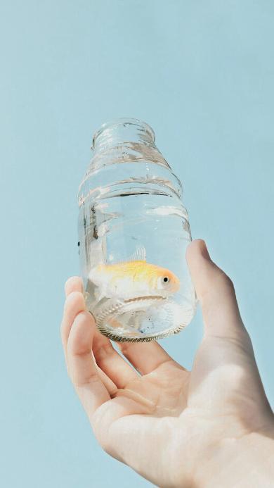 金鱼 玻璃瓶 水族 蓝色
