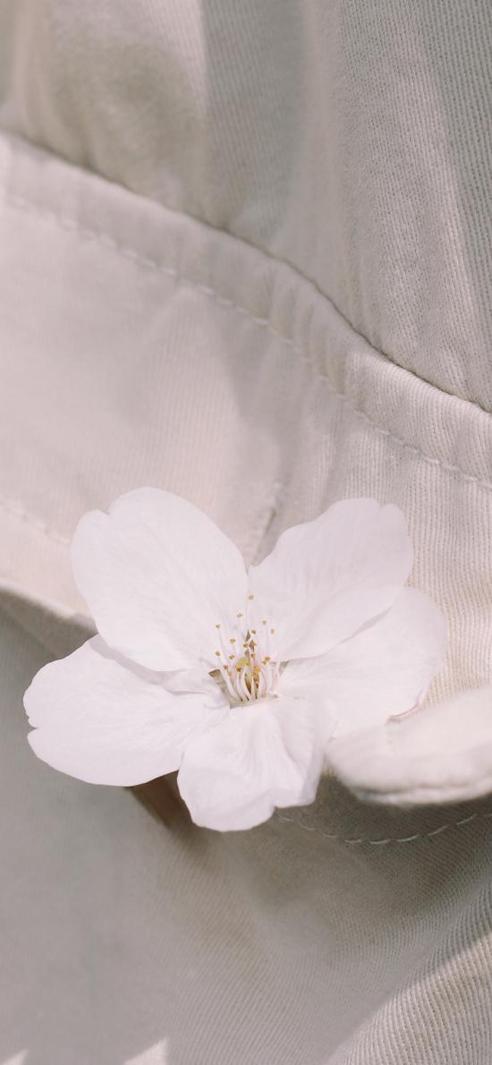 樱花 鲜花  口袋 衣服
