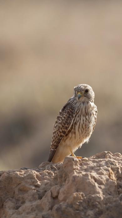 老鹰 鸟类 飞禽 岩石