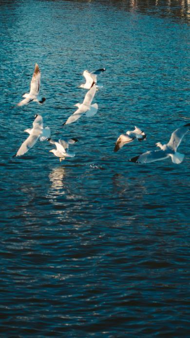 水面 飞鸟 鸟群 飞跃
