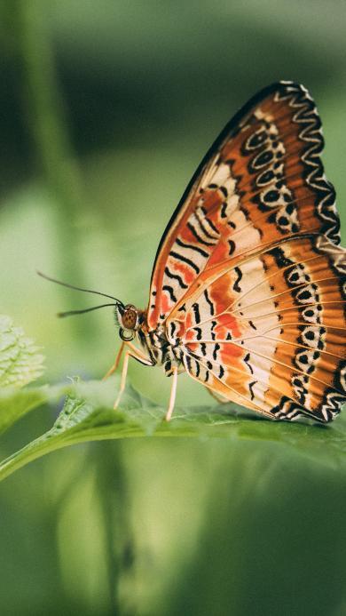 昆虫 飞蛾 蝴蝶 枝叶