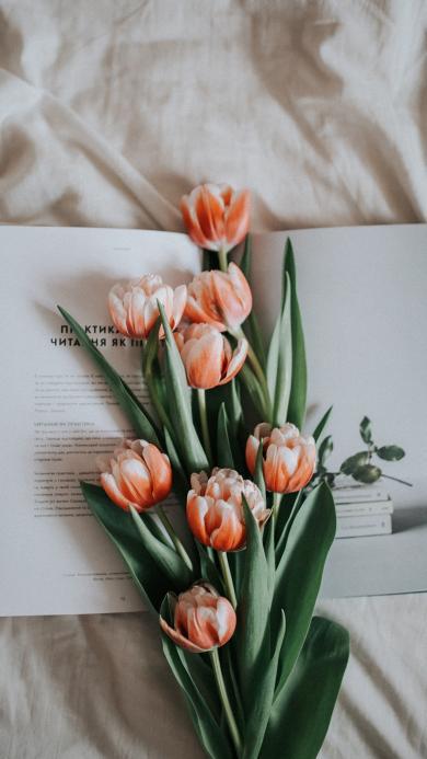 书籍 郁金香 鲜花 枝叶