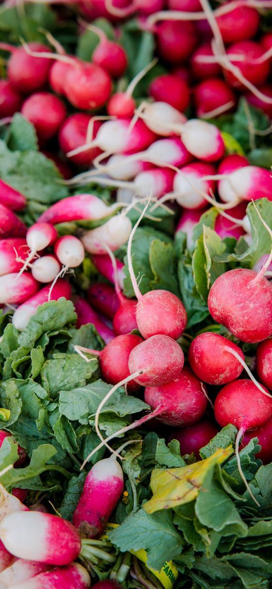 食材 樱桃萝卜 蔬菜 种植