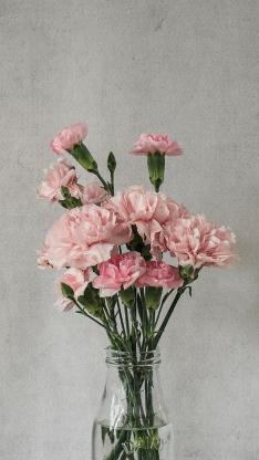 蔷薇 鲜花 花瓶 枝叶 花朵