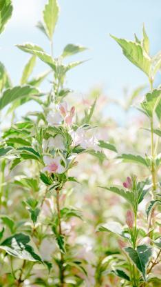 种植 密集 生长 花苞