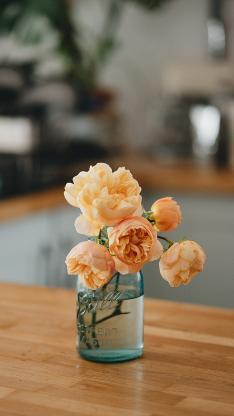 静物 鲜花 花瓶 花朵 插花