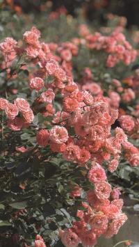 鲜花 盛开 红色 枝叶 花丛