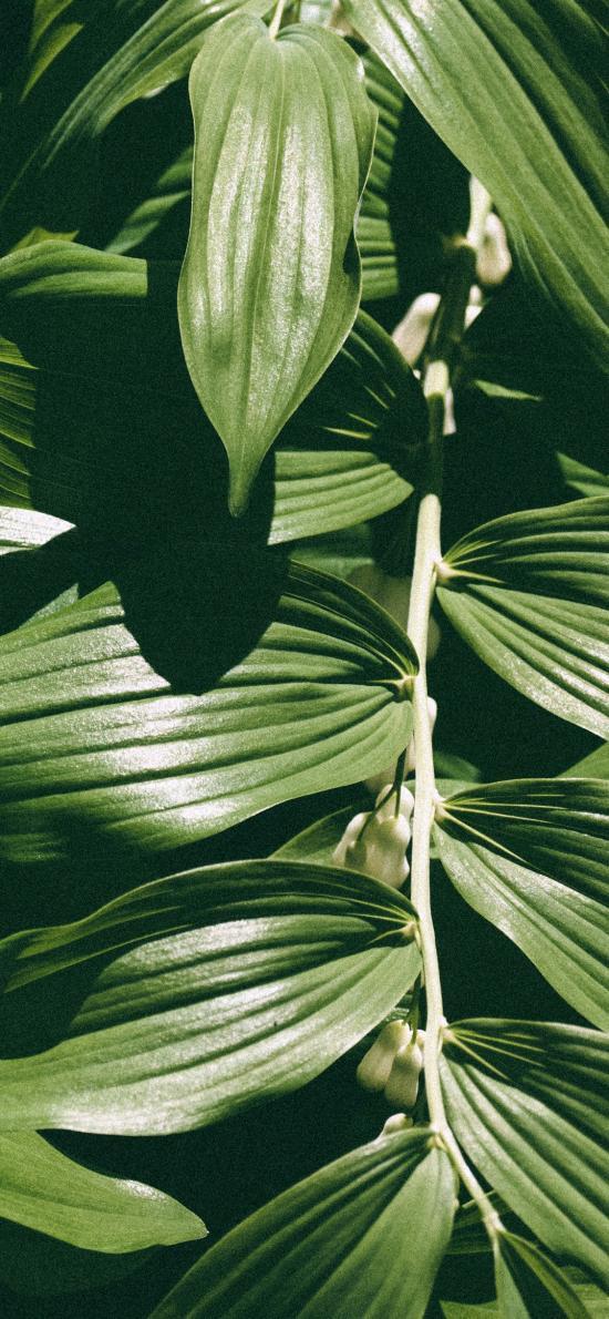 叶子 绿色 植被 阳光