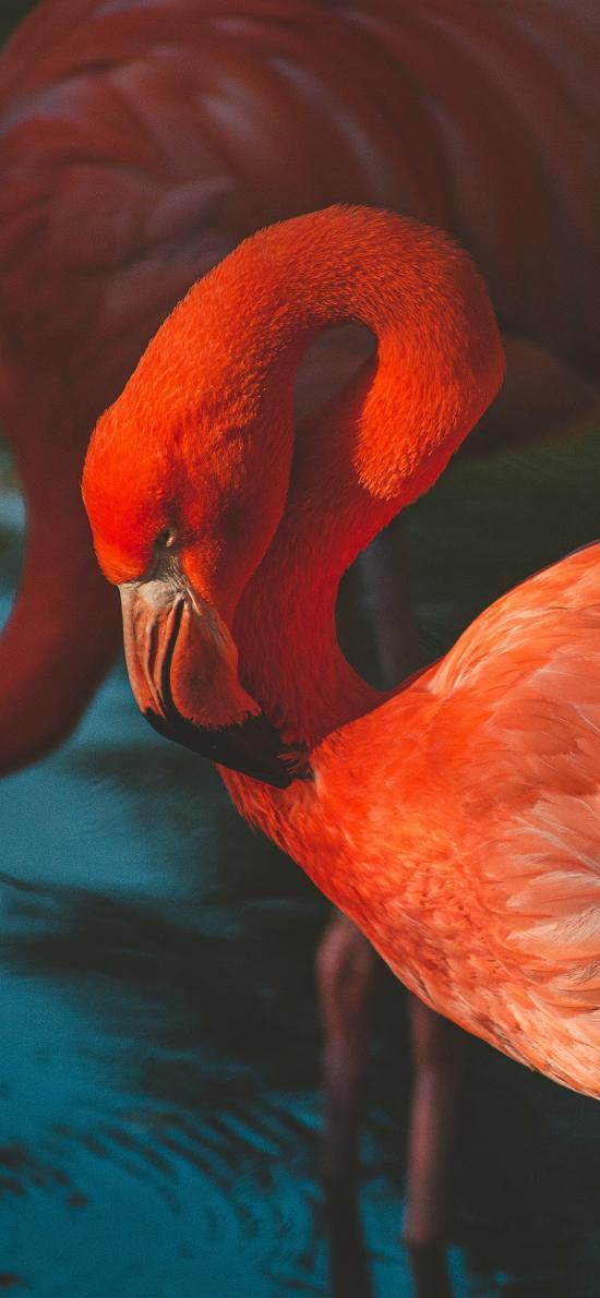 火烈鸟 红色 羽毛