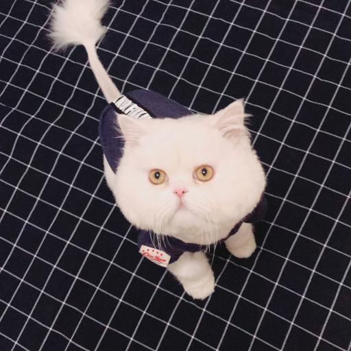 球球 网红猫咪 喵星人 宠物 可爱 萌