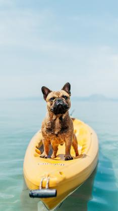 斗牛 水面 宠物 浮艇
