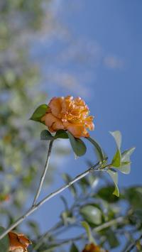 植株 鲜花 黄色 枝叶(取自微博:盛一尘)