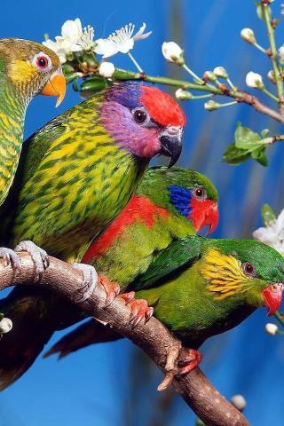 可爱鸟类 动物