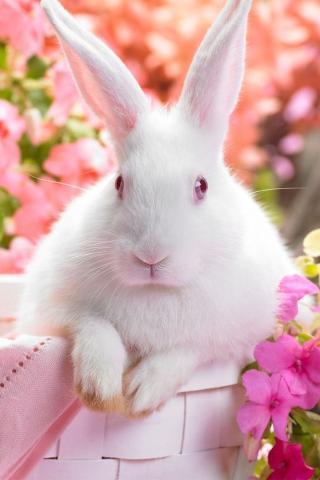 蹦蹦小兔 动物