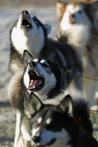 狗狗 动物