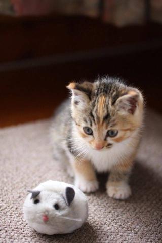 猫咪 动物