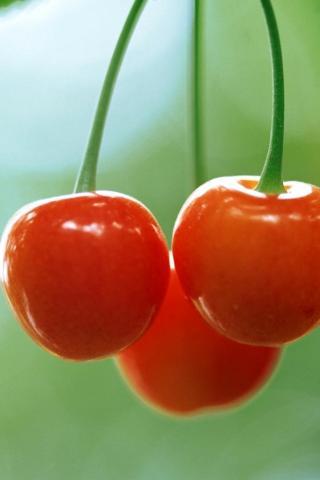 新鲜果蔬 植物