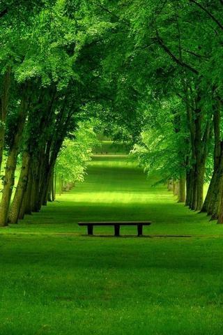 草木浓情 植物