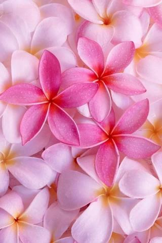 炫彩花舞 植物