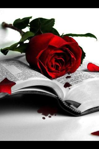 玫瑰传情 爱情