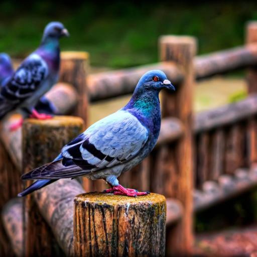 鸽子 小鸟 喙 羽毛 翅膀 彩色