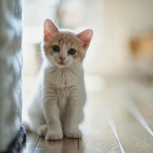 可爱 猫咪 萌宠 喵星人 宠物
