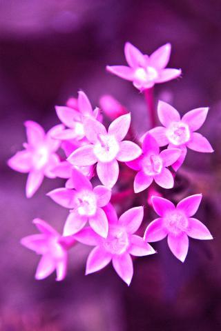 花朵 鲜花