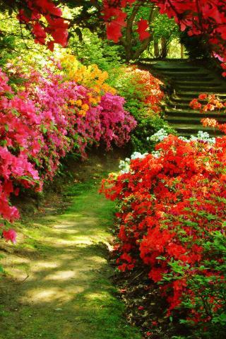 花卉壁纸 春天壁纸 植物壁纸