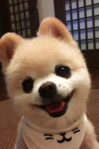 萌宠 狗狗 可爱 搞笑 贱的  动物 棕色