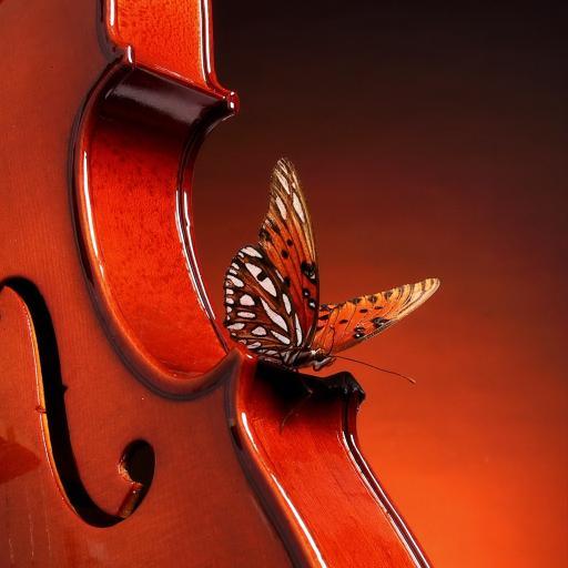 蝴蝶 小提琴 翅膀 乐器