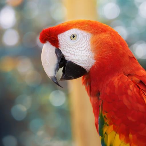 鹦鹉 鸟 羽毛 喙 色彩