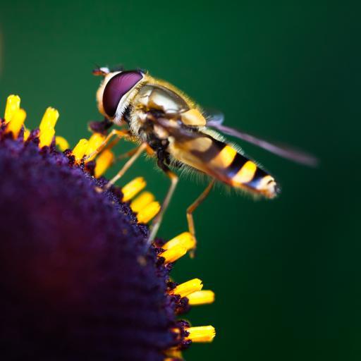 鲜花 微距 昆虫 自然清新
