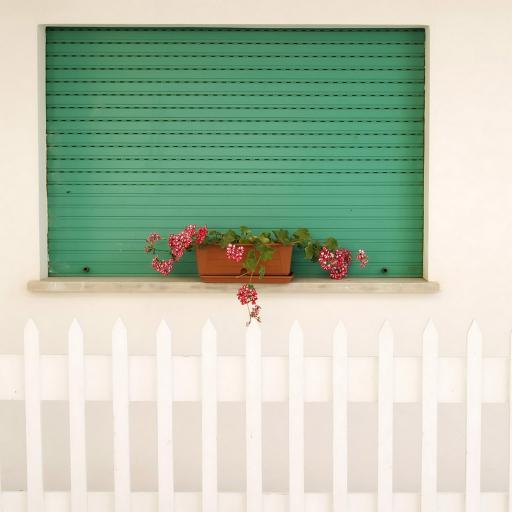 花 盆栽 窗户 植物