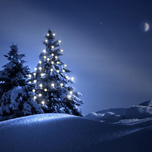圣诞树 夜晚 月亮 雪地