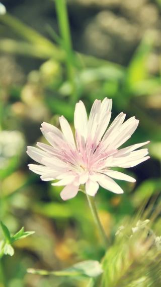 风景高清壁纸10271594 植物花卉 风景壁纸