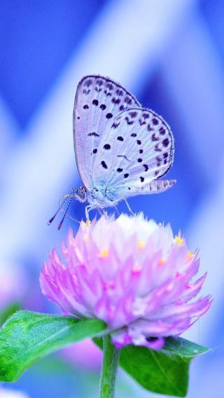 1668b97a42570c38bddd0c79e781dd8110358133 植物花卉 ?