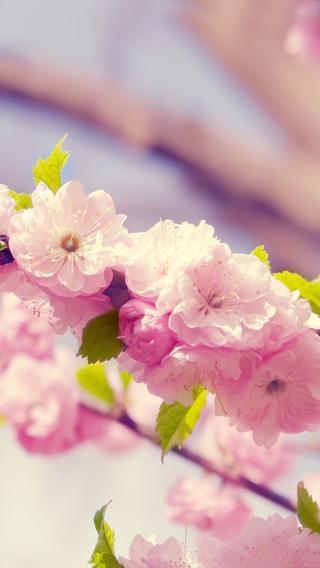 44-130G20U0460-5010357312 植物花卉 风景壁纸