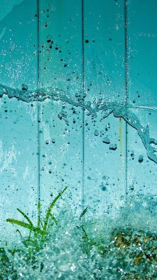 pic-1500-12-640x113610356811 植物花卉 风景壁纸