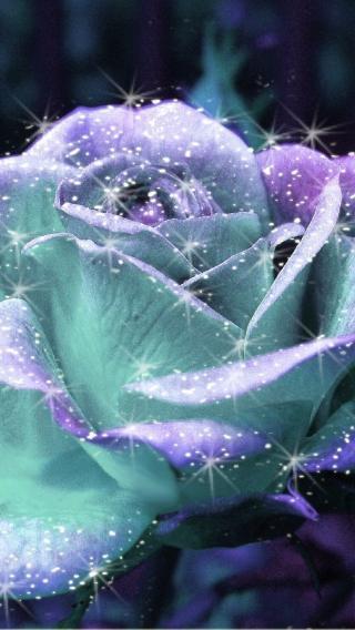 风景高清壁纸10283206 植物花卉 风景壁纸