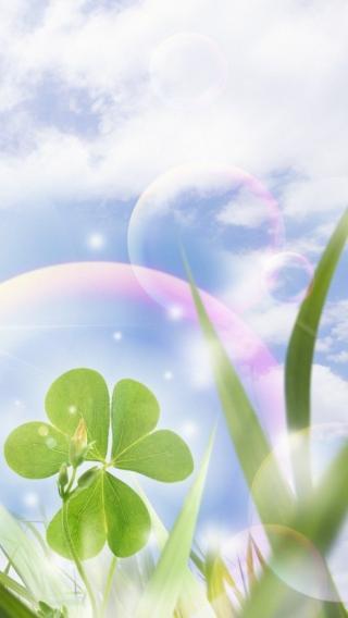 风景高清壁纸10285207 植物花卉 风景壁纸