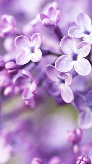 花朵-00510285991 植物花卉 风景壁纸