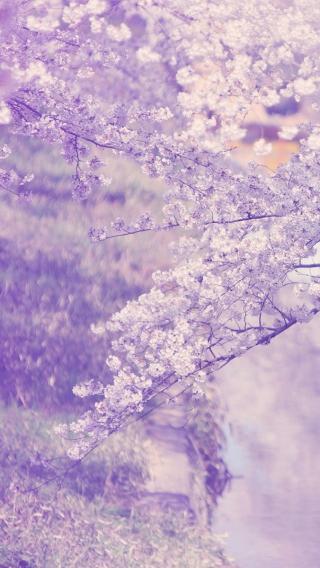 137231803719810288097 植物花卉 风景壁纸