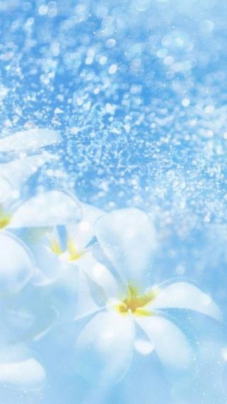 风景高清壁纸10278325 植物花卉 风景壁纸