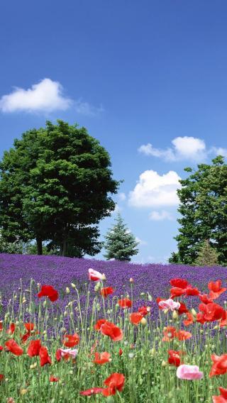 iPhone5高清壁纸10199845 植物花卉 风景壁纸