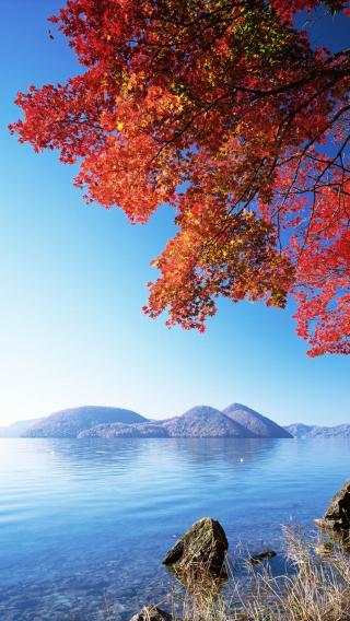 iPhone5高清壁纸10198972 美丽风光 风景壁纸