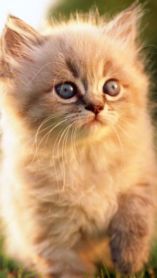 iPhone5壁纸 可爱猫咪 动物壁纸