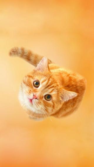 14518dbf1dac83814b152cbe0e21792710358179 可爱猫咪 ?