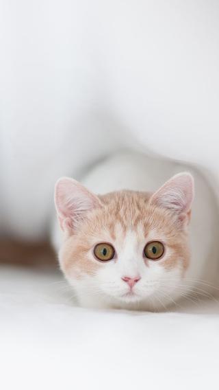 猫咪iPhone5壁纸 可爱猫咪 动物壁纸